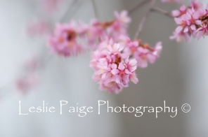 Early Spring (12)