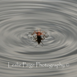 Fire Ant (2)