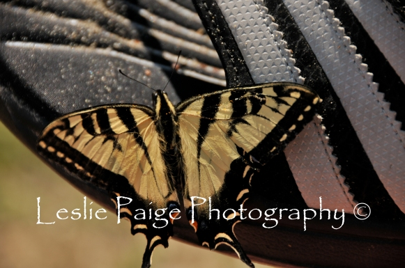 The Swallowtail and the Adidas Watershoe (5)