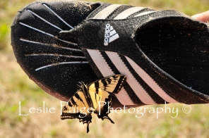 The Swallowtail and the Adidas Watershoe (8)