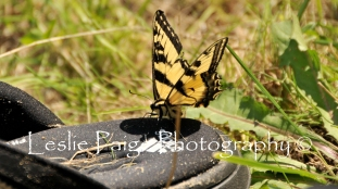The Swallowtail and the Adidas Watershoe (4)