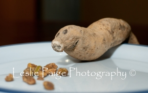 Sweet Potato Manatee 1