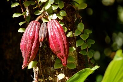 Costa Rica (12 of 22)